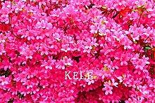 Pinkdose Original! 100 Stücke/Beutel Japanische