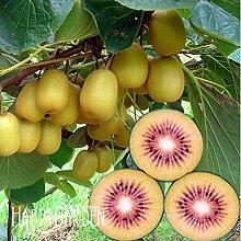 Pinkdose Sale! 100 plantas/Lot Red Kiwi-Frucht
