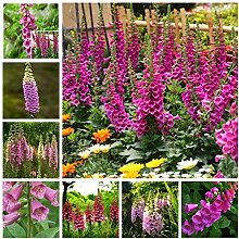 Pinkdose Verkauf 100 Teile/paket Fritillaria