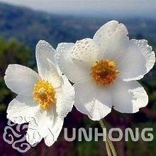 Pinkdose Verkaufs-50pcs weiße Anemone Bonsai