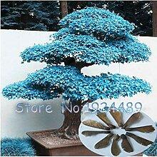 Pinkdose® 10 Teile/beutel Ahorn Bonsai Pflanzen