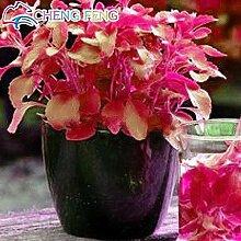 Pinkdose® 200pcs 7 Mix Farbe Stevia Kräuter