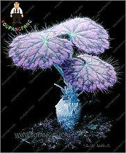 Pinkdose® New 100pcs / bag Pelargonium Peltatum