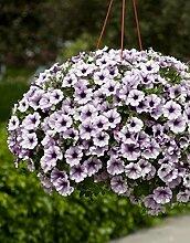 Pinkdose® Pinkdose Blumensamen: Blue Fix