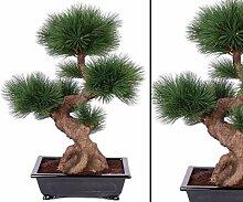 Pinus Bonsai Baum, mit 80 Nadeln, in schwarzer
