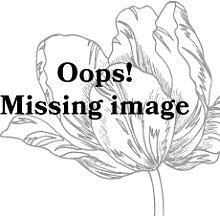 Pip Studio Floral Tasse mit Untertasse Khaki