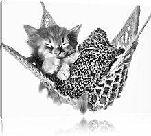 Pixxprint Katzenbaby Hängematte als Leinwandbild