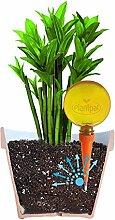 Plantpal 2Stück große bewässern Globes. Neue klare Farben Orange klare Sicht, Wasser Level. Urlaub und Alltag selbst Bewässerung für Pflanzen.
