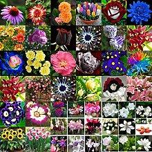 Plantree 110# Canna_100Pcs: Mischstil Blumensamen