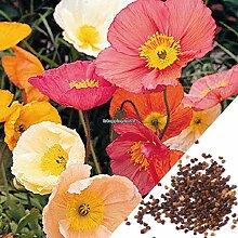 Plantree 20 Stücke: Balkon Garten Zierpflanze