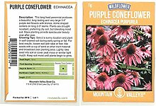 Plantree Purpurblüten von Coneflower - 1 G