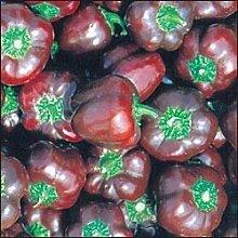 PLAT FIRM: 10 Samen von PEP273
