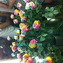 PLAT FIRM 100 Mytic Regenbogen Roe Buh Blumensamen