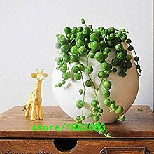 PLAT FIRM: 100pcs / bag runde Perlen Chlorophytum