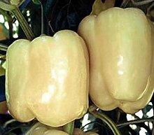 PLAT FIRM 25 Samen von Pepper - weet Weiß Glocke