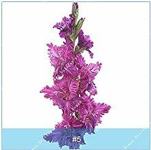 PLAT FIRM 5: ZLKING 2PC Wahre Gladiole Samen
