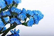 PLAT FIRM 50+ Heavenly Blue tut