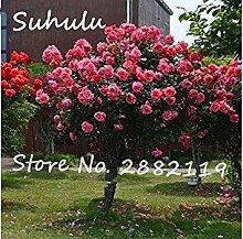 PLAT FIRM 50 pc seltene schöne Romantische rosa