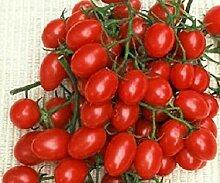 PLAT FIRM 50 Samen Roalita Tomatensamen Garten