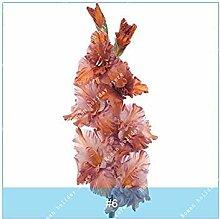 PLAT FIRM 6: ZLKING 2PC Wahre Gladiole Samen