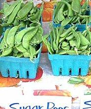 PLAT FIRM: Erbse, Oregon Zucker POD, ow, 155 Samen