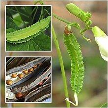 PLAT FIRM GERMINATIONSAMEN: Goabohne 20 Samen, Goa