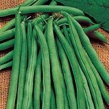 PLAT FIRM Grüne Bohnen-1 Ounce Samen (Bean) -