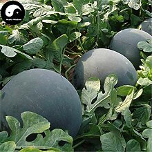 PLAT FIRM KEIM SEEDS: 50pcs: Verkauf Wassermelone