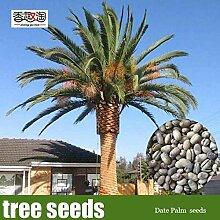 PLAT FIRM KEIM SEEDS: 5Pieces Zierpflanze