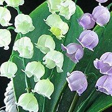 PLAT FIRM kostenlos Maiglöckchen Blumensamen,