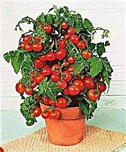 PLAT FIRM Mini Glocke Tomato 25 Samen Moon Garden