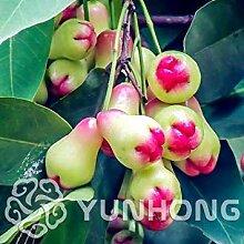 PLAT FIRM: multi: New 50PCS Bonsai Obst Bonsai