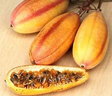 PLAT FIRM Paiflora MOLLIIMA, Banane paionfruit