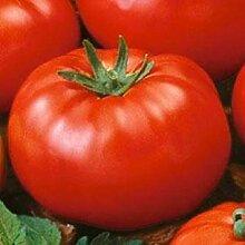 PLAT FIRM Tomate seedk 100 Samen Garten