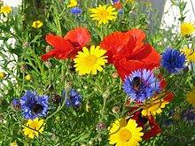 PLAT FIRM Viele 100 Packet, Blumensamen-Pack,