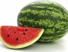 PLAT FIRM Watermelon Calweet 40 Samen Garten