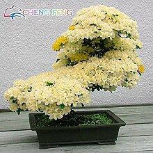 PlenTree 10pcs Rare japanische Sakura s wie Azalee