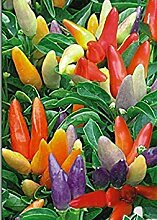 PlenTree 1G / 20 Samen der Dekoration Pepper Neuhei