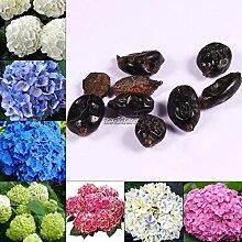Plentree Color 6: 10 Stück Hortensia Macrophylla