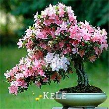 PlenTree New Arrl! 10 PC/Los Sakura Azalee flores