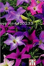 Ponak Neue 100 PC-Stern Petunia Blumensamen für