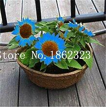 Ponak Neue 30 PC Sunflower Perennial Blumensamen