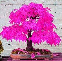 Ponak New 50pcs, japanisch Ahorn-Baum Blumensamen