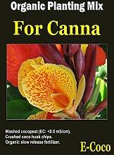 Portal Cool 1 Liter: Bio Canna Lily & Ginger