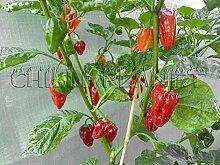 Portal Cool 10 Samen/Samen Red Chili Fatalii