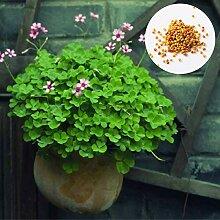 Portal Cool 1D43basket Home Mini Größe: 4 * 3 *