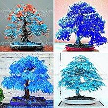 Portal Cool 20 PC-Ahorn Bonsai-Baum-Samen Seltene