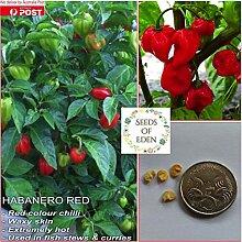 Portal Cool 30 Samen: Habanero Red Chili-Samen