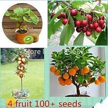 Portal Cool 4 Art Obst, Bonsai-Obstbaum-Samen,