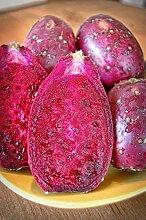 Portal Cool 5 Samen Maroon Frucht Feigenkaktus,